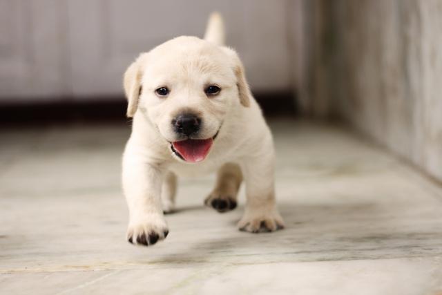 ナチュラルドッグフード 子犬