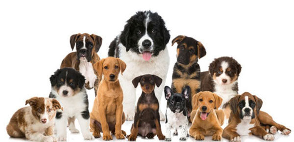 ナチュラルドッグフード全犬種対応