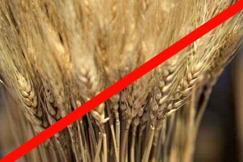 ナチュラルドッグフードは小麦不使用